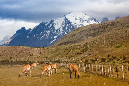 fauna and flora in Torres del Paina National Park Banco de Imagens