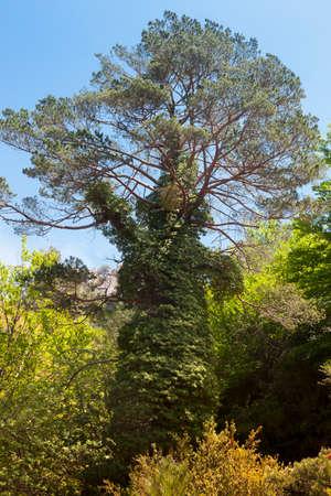 Los Ports natural park. Tarragona province. Spain