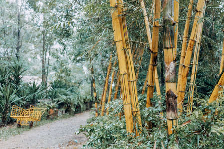 bamboo poles Archivio Fotografico