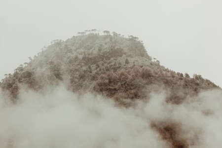 Winter in Conguillio Park. Chile