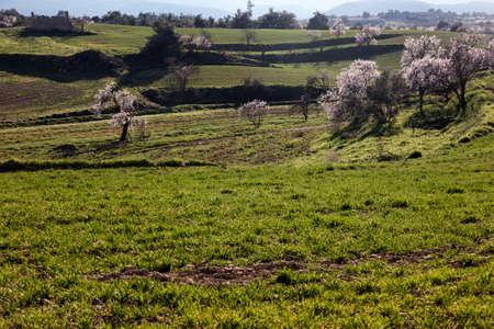 Almonds blossom in Valderrobres, Matarranya. Teruel
