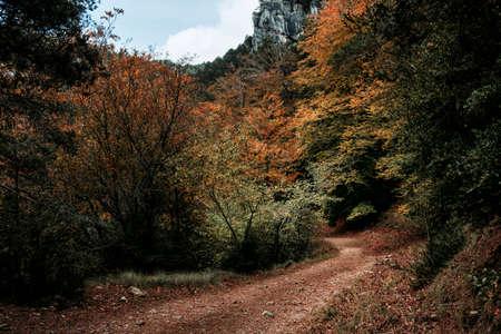 Autumn in the Beech trees of Los Ports Natural Park. La Sénia, Catalonia Archivio Fotografico