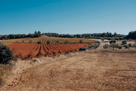 Fields of Vineyards in Matarranya. Teruel province. Spain