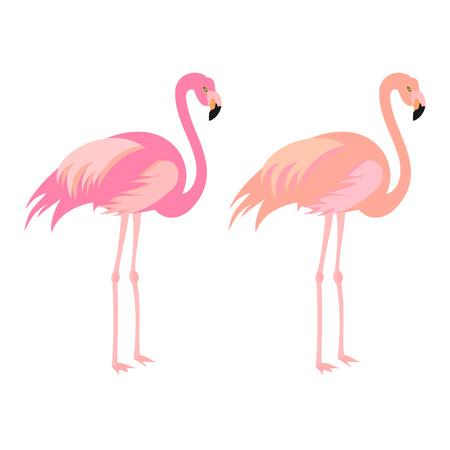 Exotic, tropical bird. Flamingo. Vector.
