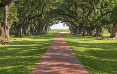 plantation: Oak Tree Lined Walkway To The Mansion At Oak Alley Plantation