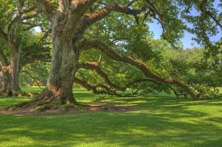 Oude Eiken Boom Bij Oak Alley Plantation In Louisiana Stockfoto