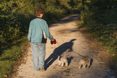 maltese dog: Adult Woman Walking Her Puppies At Sunset