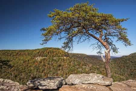 roost: Buzzards Roost Over Look At Fall Creek Falls State Park In Tennessee