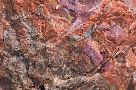 petrified fossil: Close up of a Tree Trunk at the Petrified Forest National Park in Arizona
