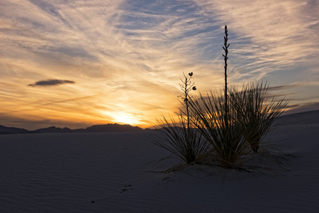 yucca: Sunset Over White Sands National Monument In New Mexico