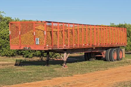 transport truck: Semi Trailer Full Of Oranges Stock Photo