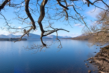 loch: Loch Lomond through tree branches Stock Photo
