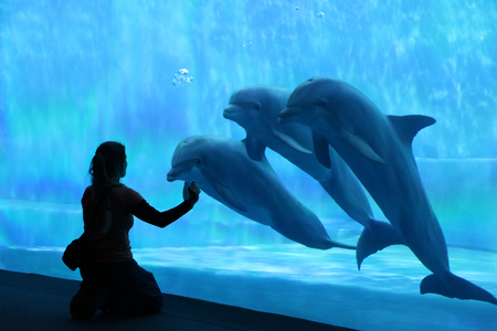 Dolphins in blue Imagens