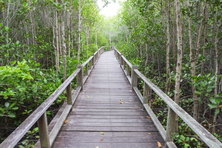 rosy cheeked: The forest mangrove at Petchaburi, Thailand  Stock Photo