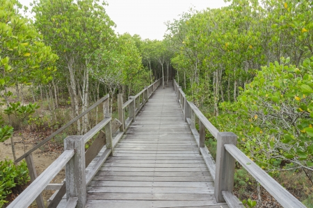 The forest mangrove at Petchaburi, Thailand Stock Photo - 20708286