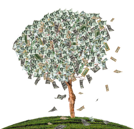 Tree mix dollars on white isolate background.  photo