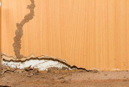 damage control: Termites on old wood background for decorate.