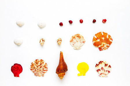 seashell: Seashell collection on white background for design. Stock Photo