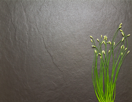 herbal background: Flower onion for cooking and health on stone background.