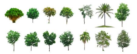 leafy trees: Colecci�n de los �rboles en el fondo blanco del aislante