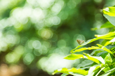 admiral: White Admiral Butterfly perched on a leaf background. Stock Photo