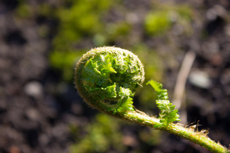 Spring young fern green nature fresh botany outdoor