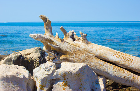 huge tree: A dry tree trunk on the shore of the Adriatic Sea in Croatia.