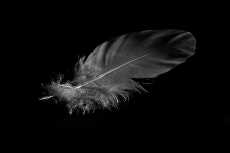 Closeup of white feather in black background