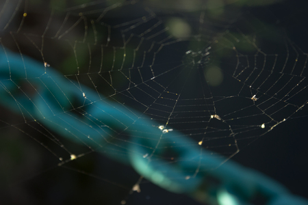 Focused on a spider network - a blue chain is in the background