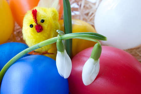 Easter colorful eggs chicken and first fresh spring snowdrops 免版税图像