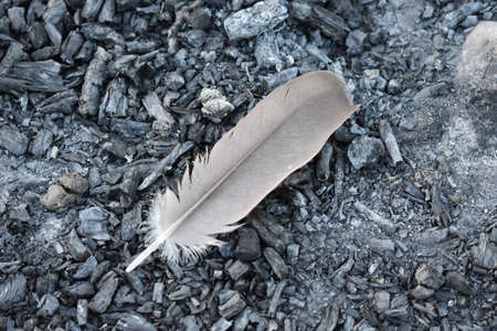 feather on Charcoal