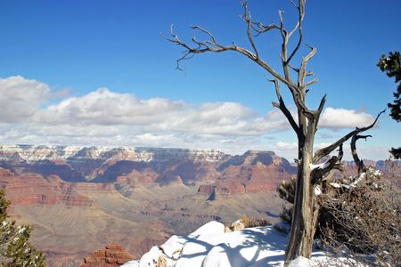 rock strata: Grand Canyon during winter with old tree and snow Stock Photo