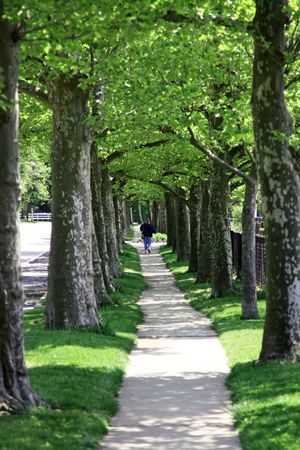 Woman walking on a peaceful tree lined path. photo