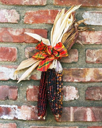 Colorful dried corn displayed for Autumn decoration