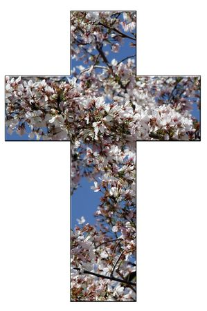 Christian Cross with Washington DC cherry blossoms in late stage bloom