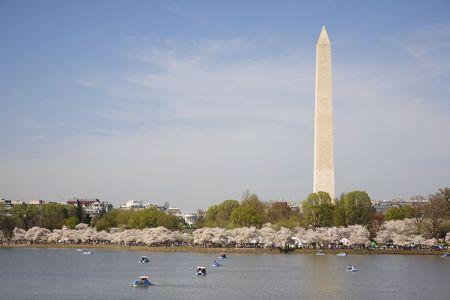 Washington Monument Cherry Blossom Right