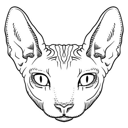 haarloze sfinx kat gezicht graphics, schetsen zwart-wit