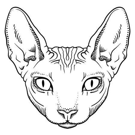 hairless sphinx cat face graphics, outline black and white