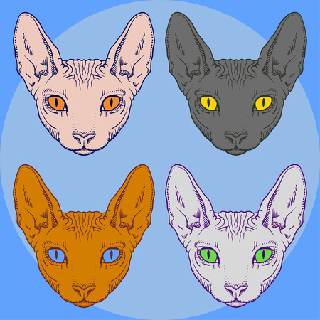 sphinx: Set of hairless sphinx cat face graphics, outline black and white