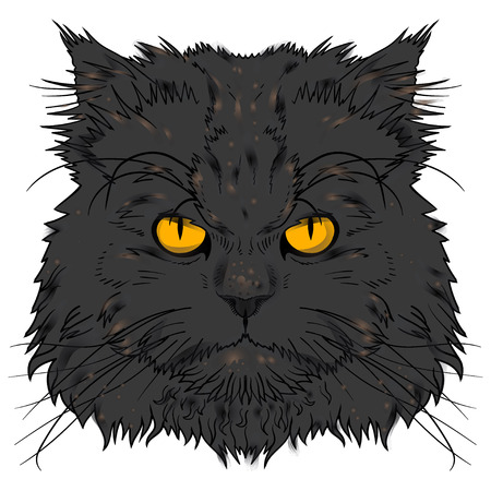 persian cat: The head of the Persian cat graphics Illustration