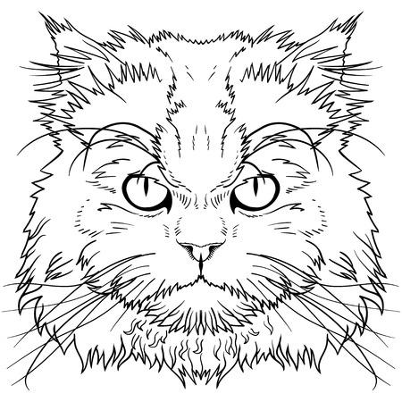pet cat: The head of the Persian cat graphics Illustration