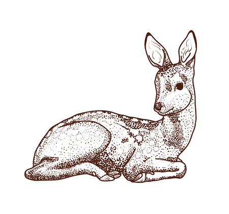 lay: contour drawing deer points. Cartoon deer lay isolated on white. Illustration
