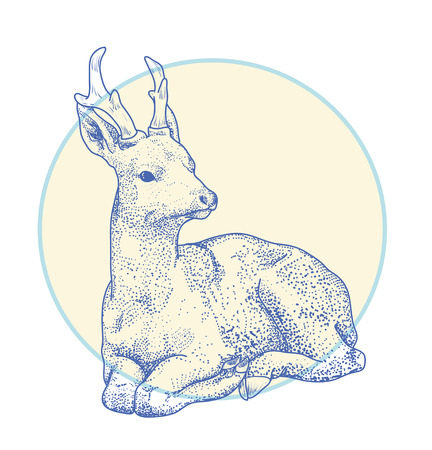 hoofed: contour drawing deer points. Cartoon deer lay isolated on white. Illustration