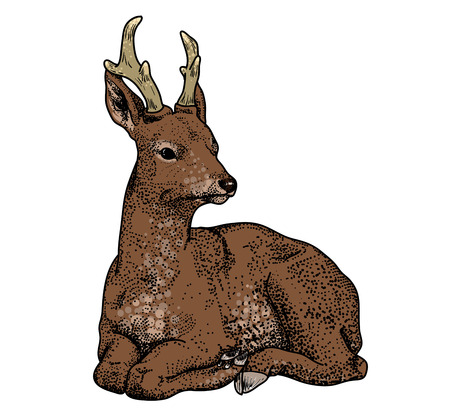 venison: cartoon deer isolated on a white background