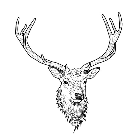 antlers: Cartoon deer head with antlers isolated on white background