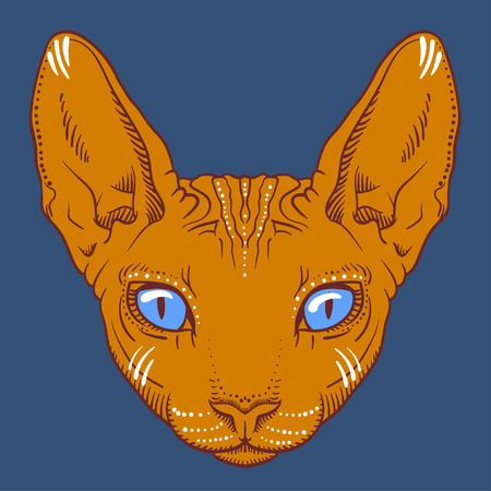 sphinx: hairless sphinx cat face graphics, outline black and white