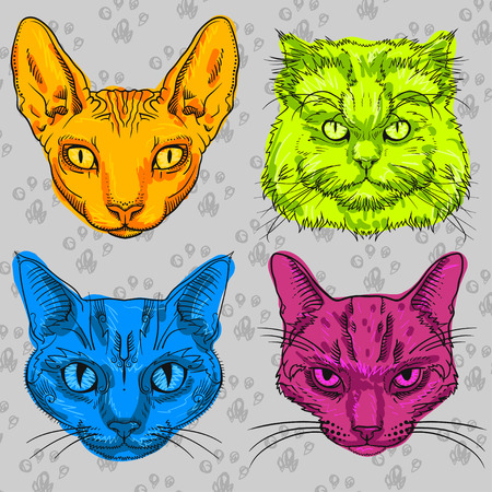 small group of animal: Four multi-colored cat isolated on a gray background with the cat paws