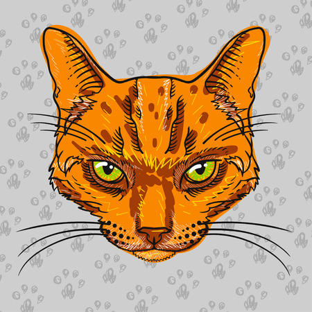 tabby cat: orange tabby cat isolated on gray background with cat paws