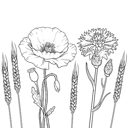 The graphics outline floristic flowers, poppy, cornflower, wheat isolated on a white background.