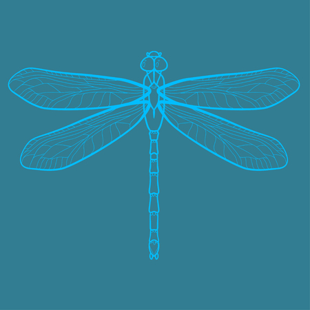 isoleted: Dragonfly vector illustration isoleted on blue background